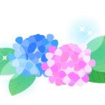 紫陽花(あじさい)のフリーイラスト素材